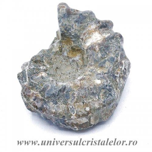 Amonit douvilleiceras